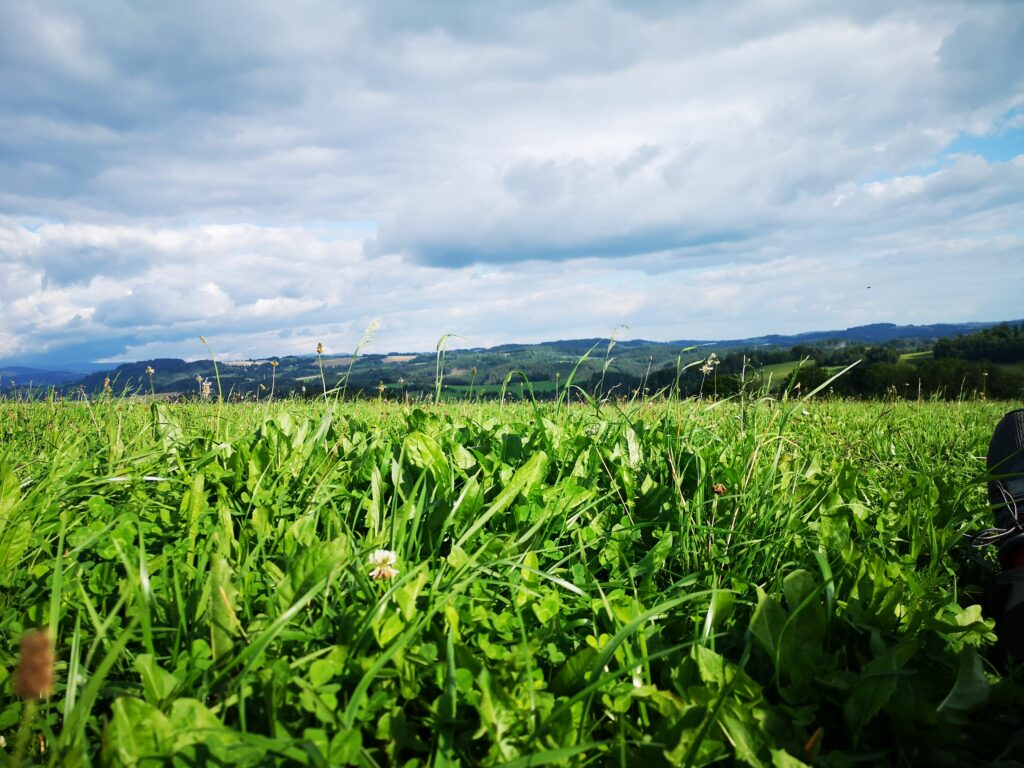 sezona ležení v trávě